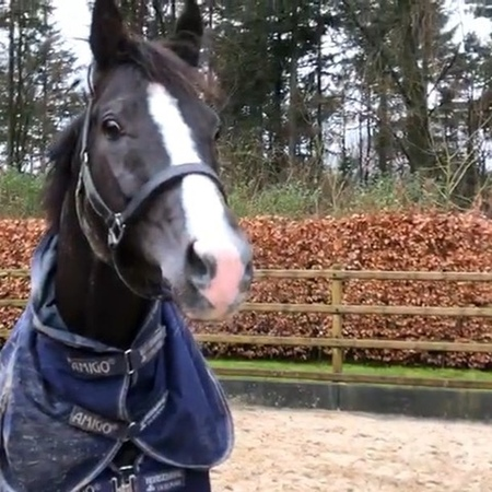 """GLOCK HORSE PERFORMANCE CENTER on Instagram """"Paddock time 😀 GLOCK's Total US loves it 💕 (Hannoverian, 2012, Totilas x Sir Donnerhall I) • GLOCK st..."""