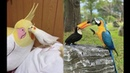 Funny Parrots Videos Compilation cute moment of the animals Cute Parrots 6