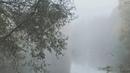 Туман (mist)