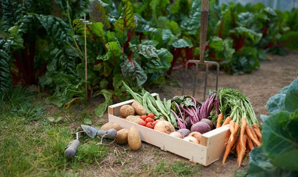 Севооборот культур на огороде: таблица