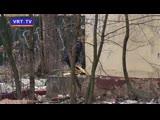 Грязь, мусор и заброшенный дом № 8 на ул. Горького. Когда эту территорию приведут в порядок?