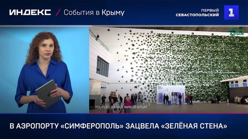 В аэропорту «Симферополь» зацвела «зелёная стена»