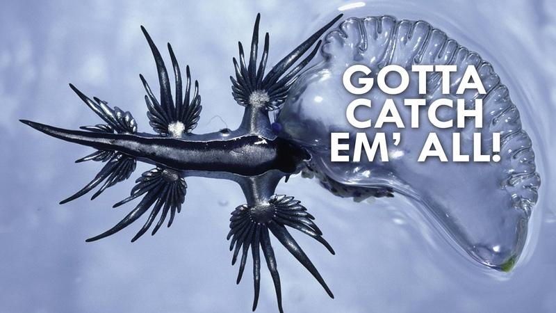 Sea Slugs are like Real-life Pokemon (feat. Animal Wire)