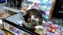 🔴 🔴 🔴 Кот-Звезда Ютьюба / The Cat-YouTube Star 🎧 🎬 😂 ☺ ✨ (2 вер. реж. находка) 🎧 🎬 😂 ☺ ✨