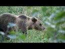 Охота на медведя и кабана