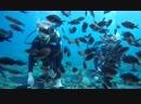 Diving in Cyprus 2018 Ayia Napa