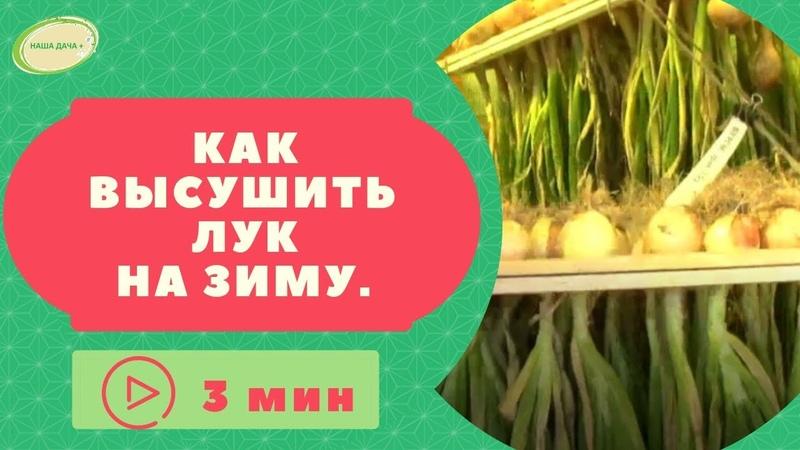 Как высушить лук Корнюшина Людмила