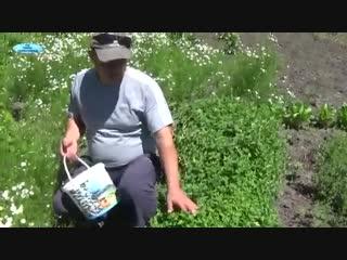 ЛЕЧЕБНАЯ ГРЯДКА-Дачники
