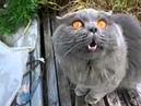 кот говорит открой глаза (online-video-cutter)