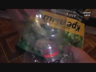 Как посадить лук на зелень дома на подоконнике-Евроремонт