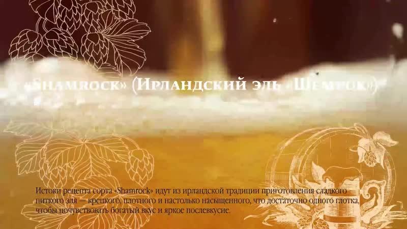 Шемрок (Томское Пиво)