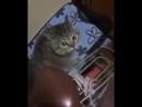 Азиатка и кошка напевают одну и ту же мелодию