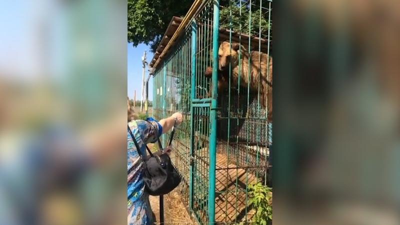 Если не в приют, то на мясо в Оренбуржье у придорожного кафе обнаружили запертых в клетке медведей