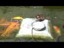 Утка кормит рыбу