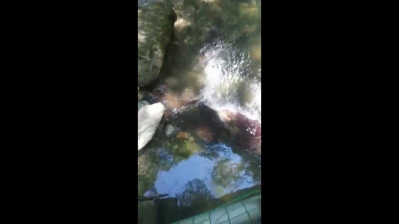 Озерце райское наслаждение ЛОО Август 2018г