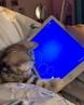 "Pencinta Kucing 🇮🇩 on Instagram: ""Semangat cing nangkep ikannya . Langsung Tap 2x ❤ kalau suka, jangan lupa share dan Tag Temenmu yang suka kucing..."
