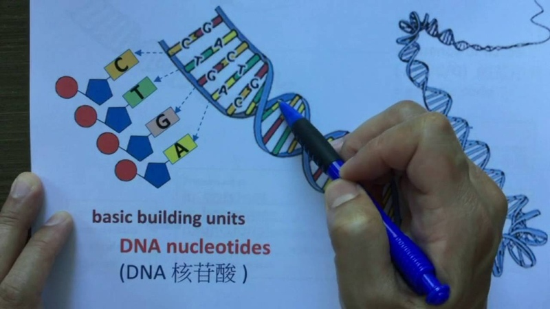Lo Sir Teaching DSE Genetics (1) ~ DNA structure