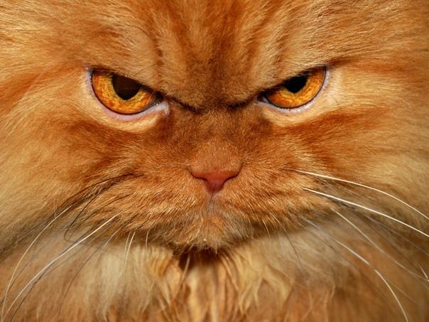 кот-лицехват (мат, 18,) в моём детстве в соседнем районе завелась банда живодеров. 3 выблядка возрастом 13-15 лет ловили котов и мелких собак и скидывали с крыши дома в котором жили (5-й этаж).