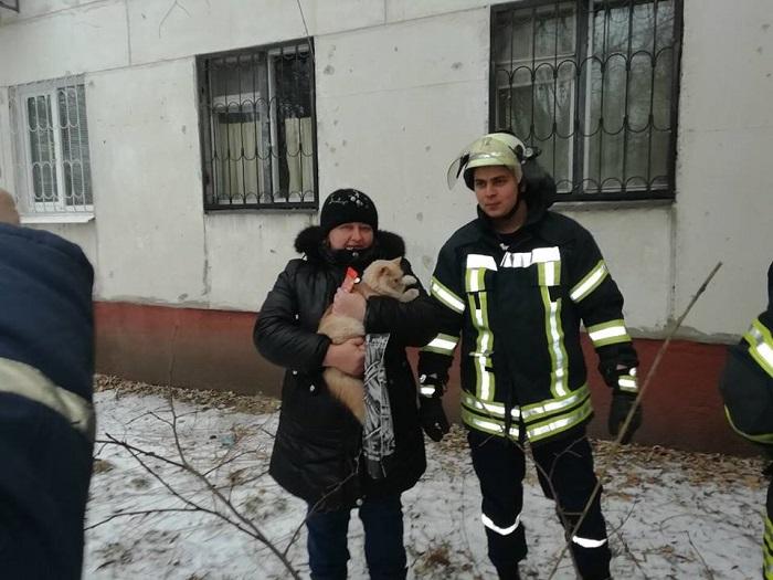 В Северодонецке спасатели спустили с дерева