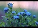 Handel - Rodelinda - Io t'abbraccio (Nuria Rial, Lawrence Zazzo)