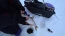 Зима 18 19г Горе море ловля плотвы на безмотылку
