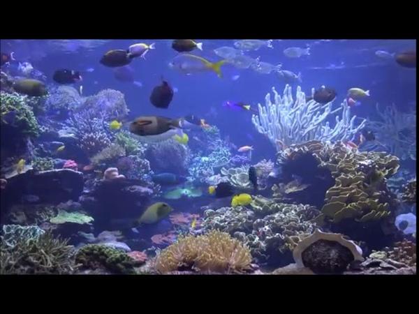 Aquário Virtual - Flautas Indígenas e Musica Calma (Virtual Aquarium)