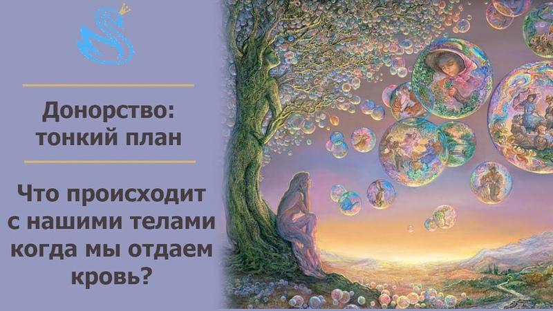 РЕГРЕССИЯ. КАК ЧЕРЕЗ КРОВЬ ЗАБИРАЮТ СИЛУ РОДА? Сеанс 119