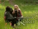 UniversoBio- Chiacchierando con KOKO, the gorilla