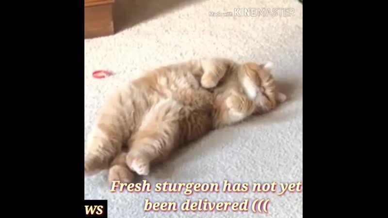 The last desire of a dying cat (joke)