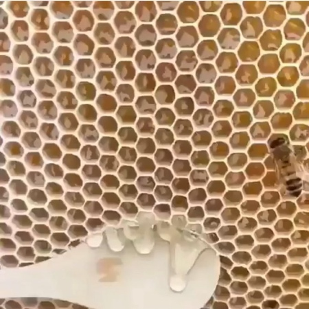 "Honeycomb Asmr🍯🐝 on Instagram ""Cool ✧₊⁎⁎⁺˳✧ Follow @sugarhoneycombs for more🍯 ✧₊⁎⁎⁺˳✧ Credits to ✧₊⁎⁎⁺˳✧ eatingsounds honeycomb honeycombasm..."