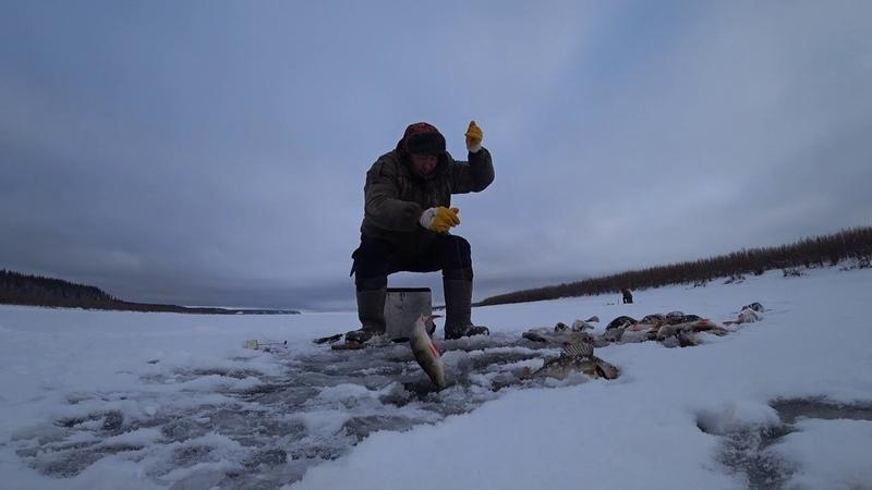 Дикий клев окуня -2 catch of perch 2018, part 2 Yakutia Якутия