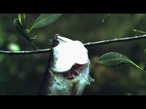 Амазонка HD