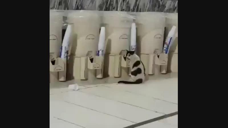 Напоил кошку зам-зам