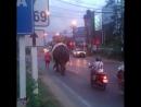По Самуи слона водили!