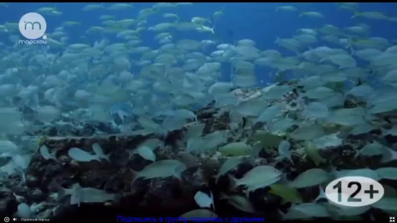 Голубые Багамы 4 эп Коралловые рифы