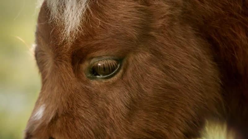Реклама Амазон или почему пони не такие как лошади