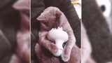 cat relax