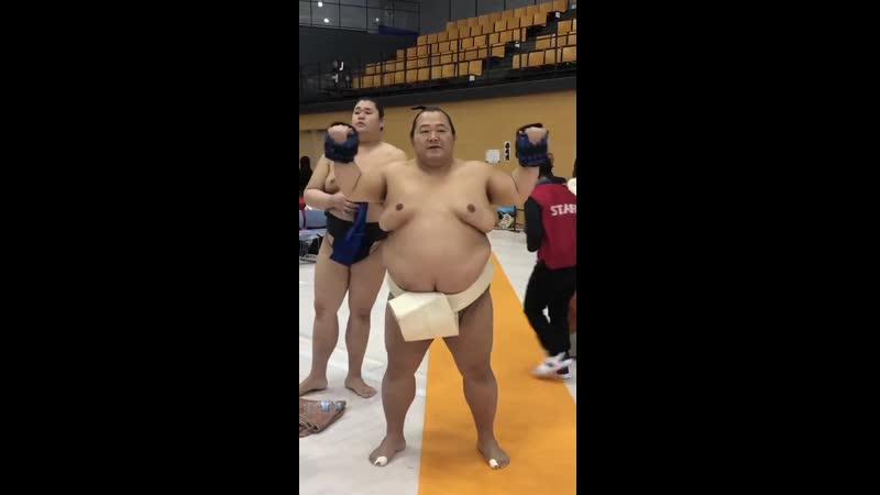 春巡業八王子市 - 重りを付けてトレーニング中豊ノ島 - sumo 相撲