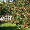 Рисуночный интенсив «Фруктовый сад»
