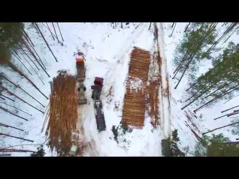KASTAMONU в России