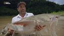 Nat Geo Wild: Крупные рыбы Зэба: огромный сом (1080р)