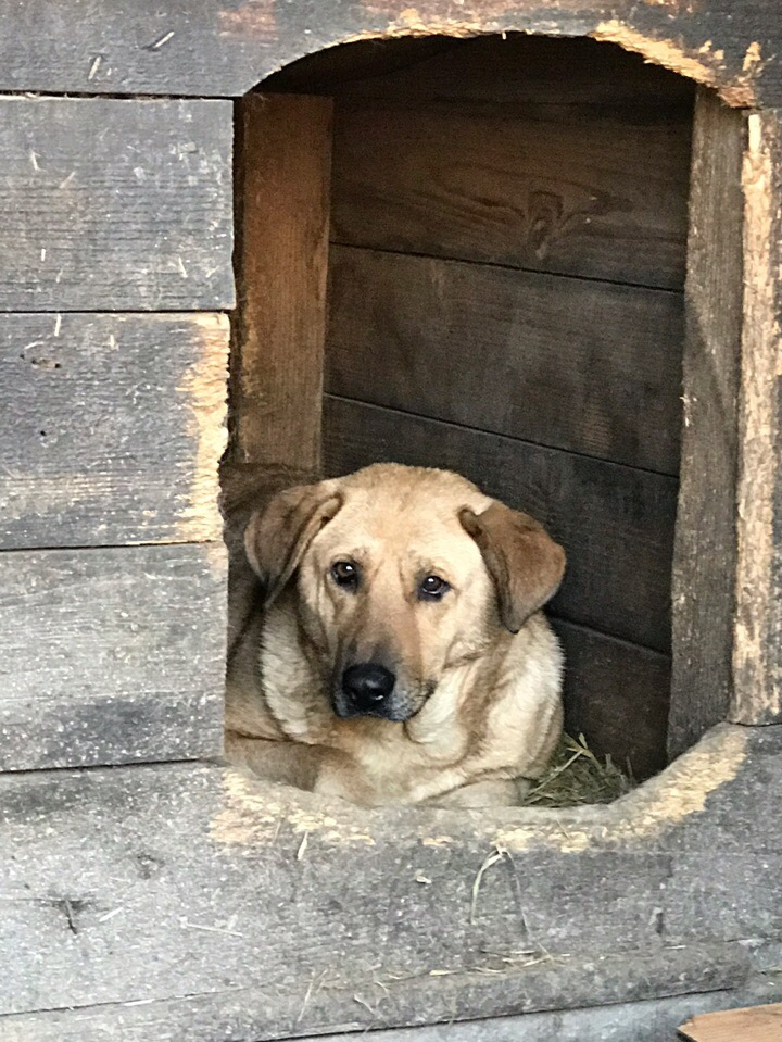 В Курске начался отлов бродячих собак. Животных будут фотографировать и размещать в соцсетях