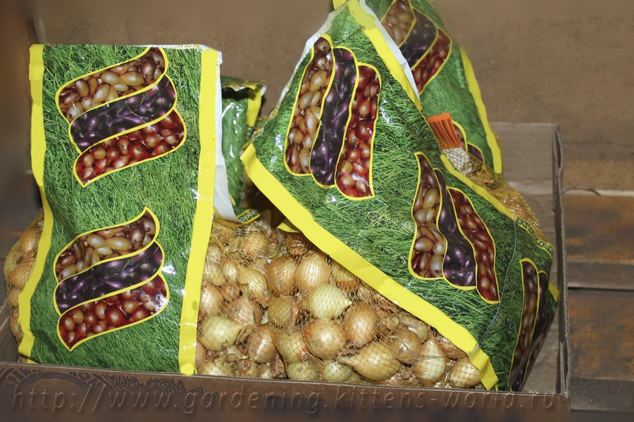 Как правильно хранить лук севок до посадки