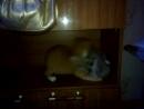 коты дрочуны