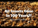 Insect Population Decline New Research Explained In 5 Minutes