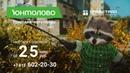 ЖК Юнтолово. Енот Степан и селфи. Природа в черте города. Квартира с отделкой от 2,5 млн. рублей