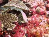 turtle vs moray eel