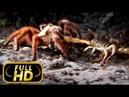 САМЫЕ ОПАСНЫЕ ЖИВОТНЫЕ АМАЗОНИЯ FULL HD Документальный фильм на Amazing Animals TV