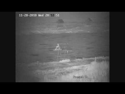 пруд Черноморец 28.11.18г заяц засветился на камеру.