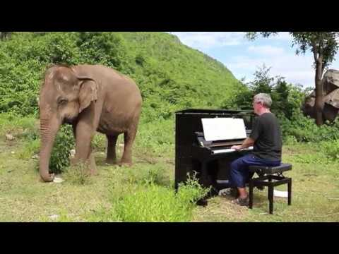 Bach on Piano for Blind Elephant